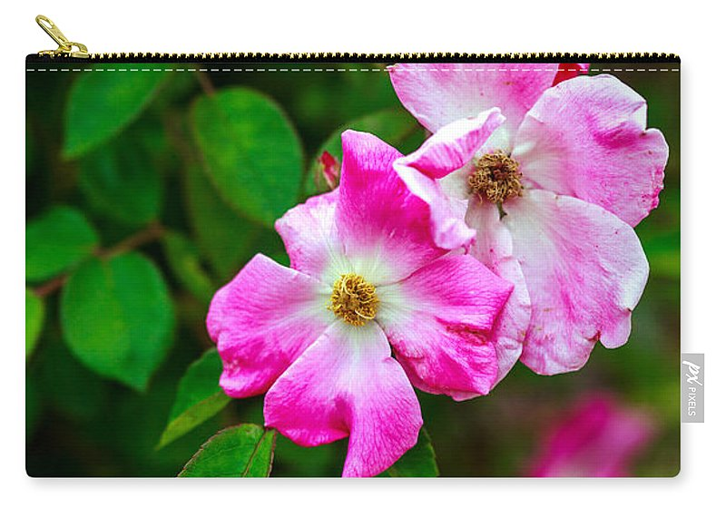 Bumble Bee Carry-all Pouch featuring the photograph Pink Roses by Sennie Pierson