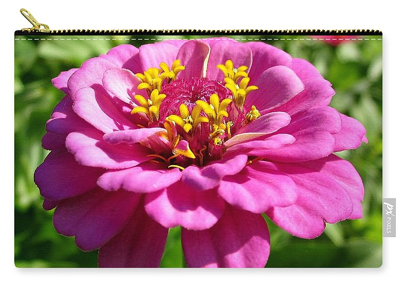 Zinnia Carry-all Pouch featuring the photograph Pink Zinnia by MTBobbins Photography