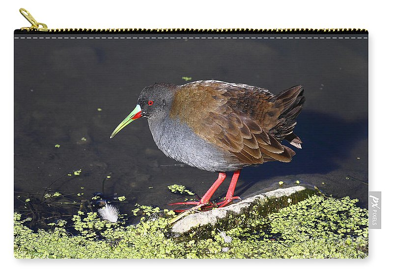 Bird Carry-all Pouch featuring the photograph Plumbeous Rail by James Brunker