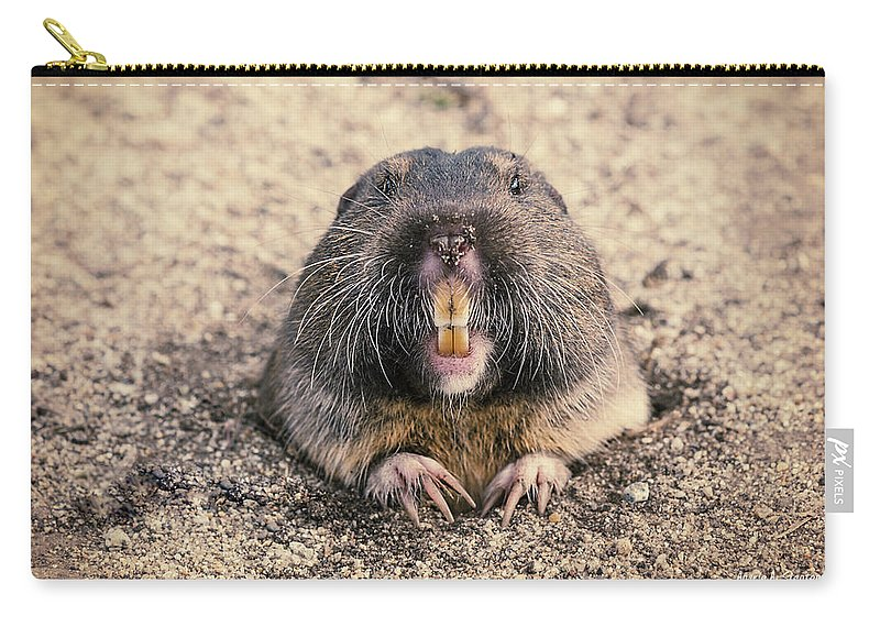 Foster City Carry-all Pouch featuring the photograph Pocket Gopher Chatting by Angela Stanton
