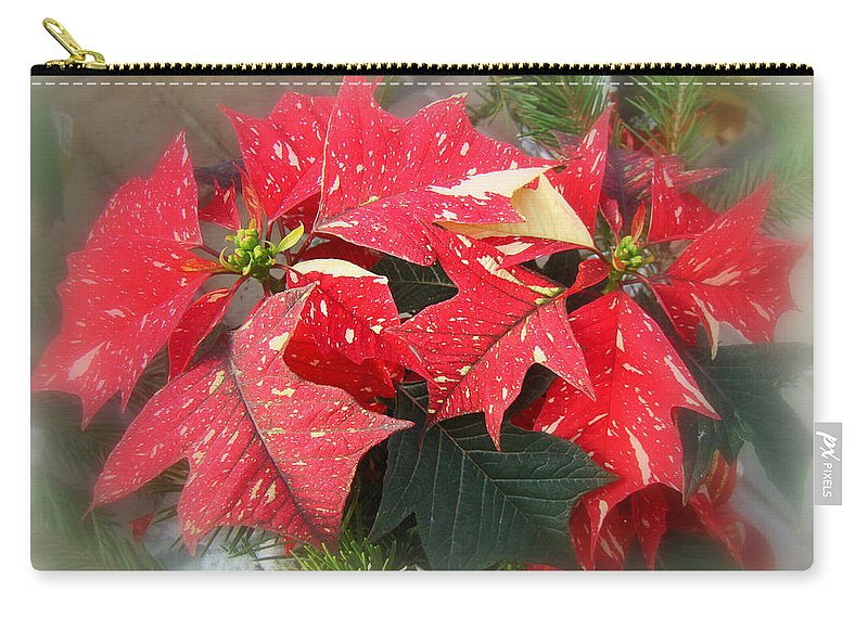 Poinsettia Carry-all Pouch featuring the photograph Poinsettia In Red And White by Mother Nature