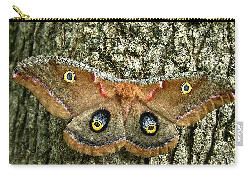 Antheraea Polyphemus Carry-all Pouch featuring the photograph Polyphemus Moth by William Tanneberger