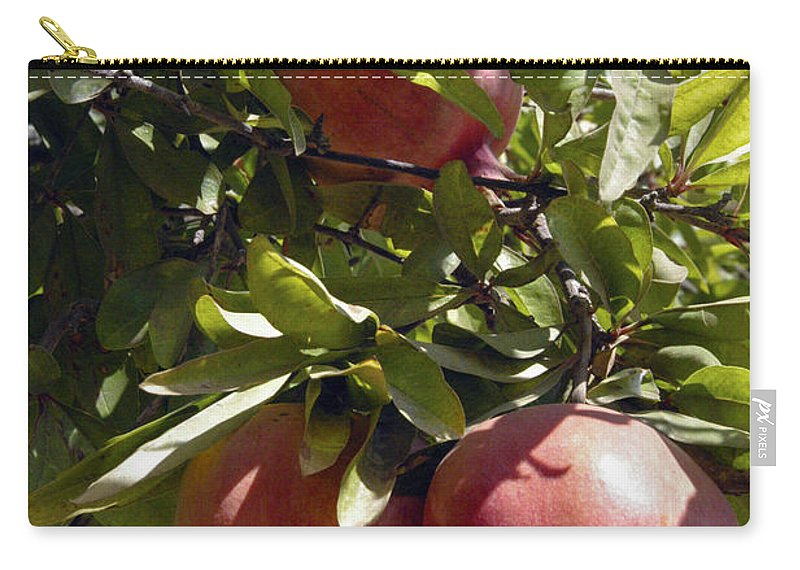 Kayaköy Turkey Pomegranate Pomegranates Fresh Fruit Ripe Fruits Tree Trees Food Foods Leaf Leaves Still Life Nature Carry-all Pouch featuring the photograph Pomegranate Tree by Bob Phillips