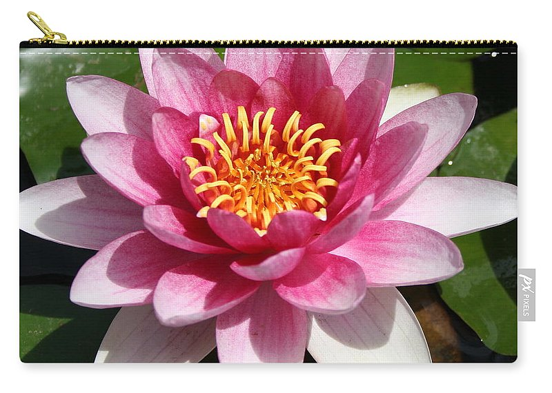 Waterlily Carry-all Pouch featuring the photograph Ponds Pride by Christiane Schulze Art And Photography