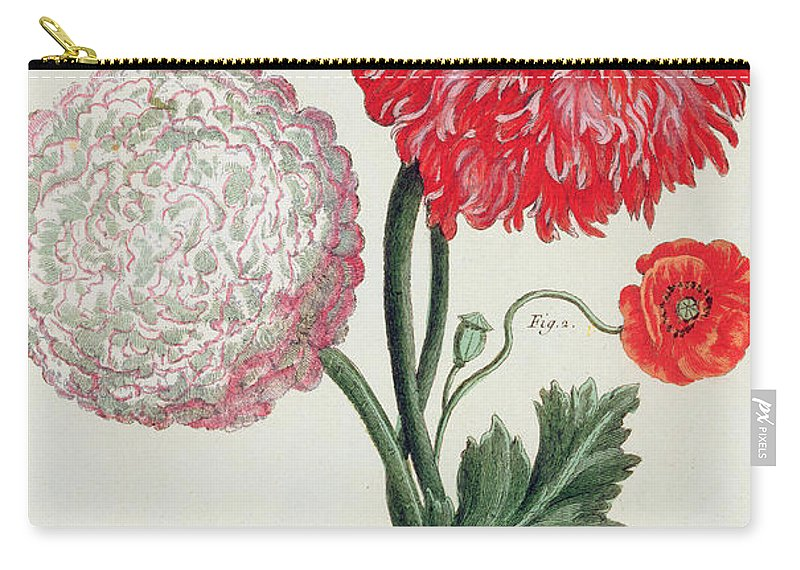 Botany Carry-all Pouch featuring the painting Poppy by Basilius Besler