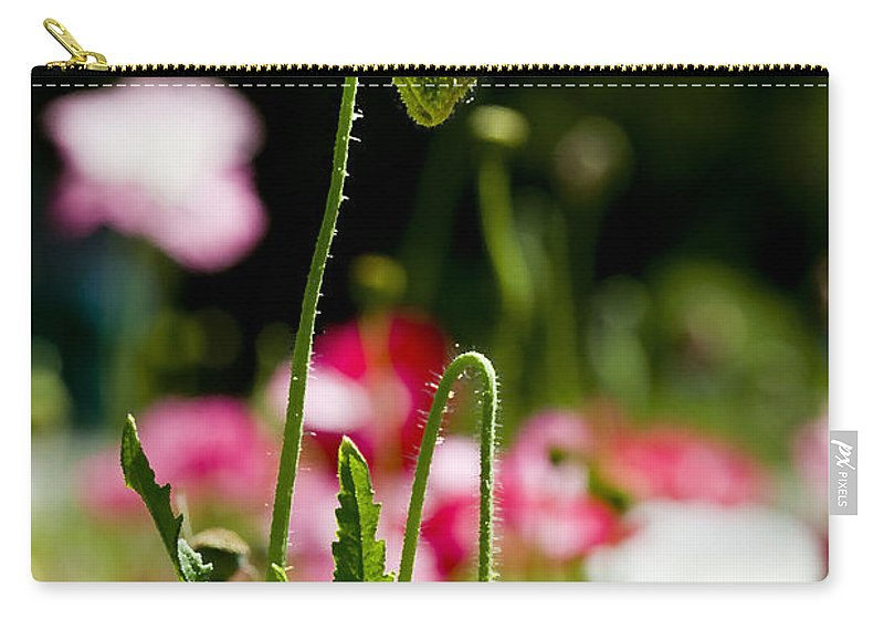 Poppies Carry-all Pouch featuring the photograph Poppy Getting Ready by Rich Franco