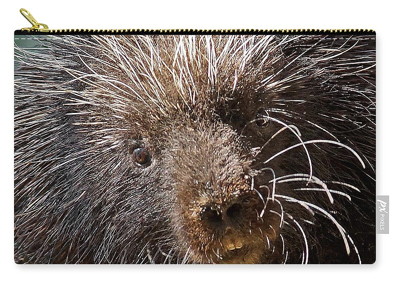 Porcupine Carry-all Pouch featuring the photograph Porcupine by Ernie Echols