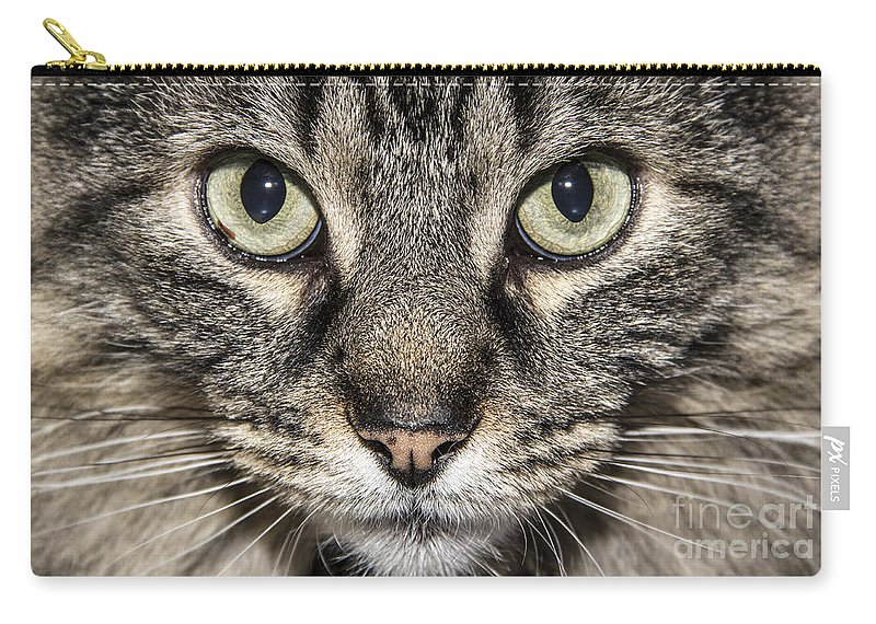 Cat Carry-all Pouch featuring the photograph Portrait Of A Cat by Jeannette Hunt