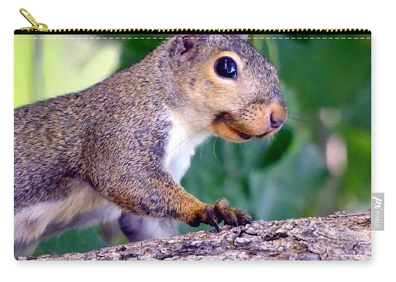 Squirrel Carry-all Pouch featuring the photograph Portrait Of A Squirrel by Deena Stoddard