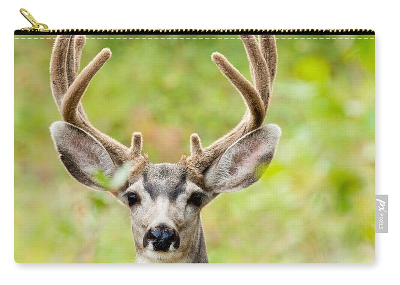 Adult Carry-all Pouch featuring the photograph Portrait Of Mule Deer Buck With Velvet Antler by Stephan Pietzko