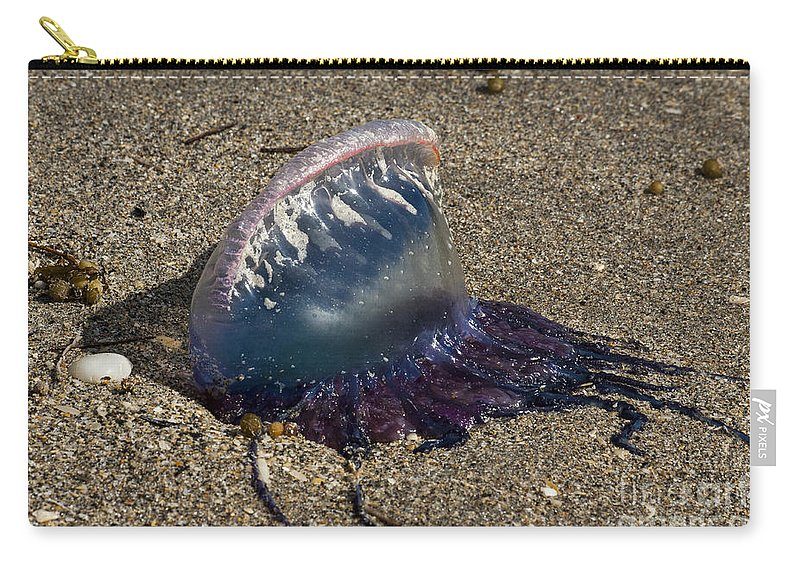 Man-o-war Carry-all Pouch featuring the photograph Portuguese Man-o War Beached by Darleen Stry