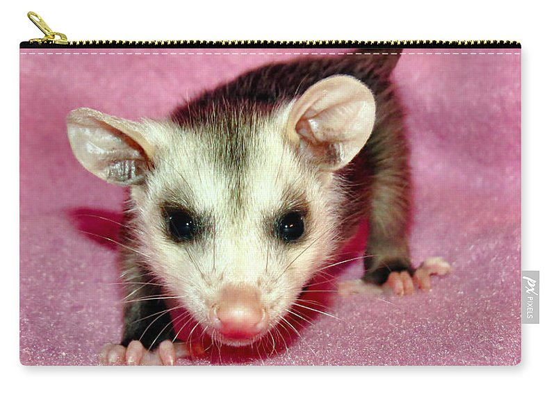Opossum Carry-all Pouch featuring the photograph Poser Possum by Art Dingo