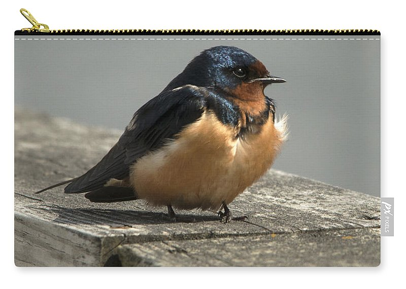 Barn Swallow Carry-all Pouch featuring the photograph Posing Barn Swallow by Jayne Gohr
