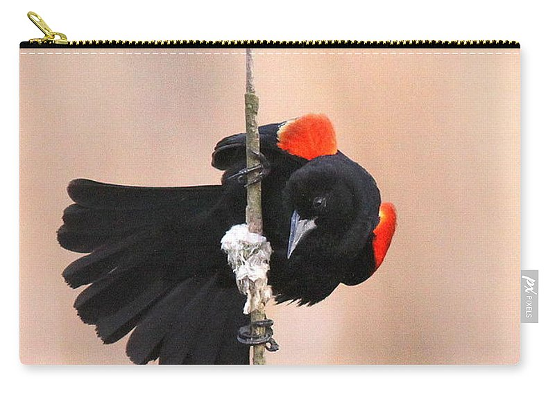 Red-winged Blackbird Carry-all Pouch featuring the photograph Posing For The Lady - Red-winged Blackbird by Travis Truelove