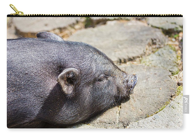 Pig Carry-all Pouch featuring the photograph Potbelly Pig by Pati Photography