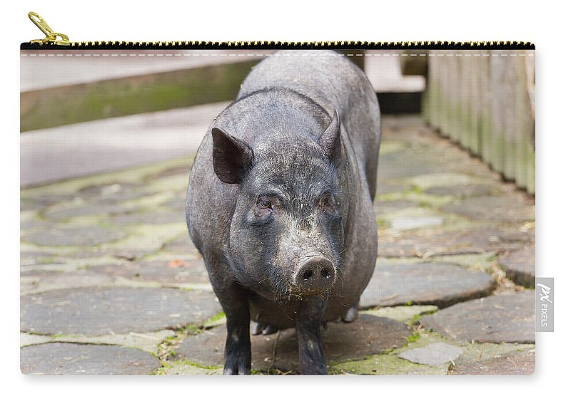 Pig Carry-all Pouch featuring the photograph Potbelly Pig Standing by Pati Photography