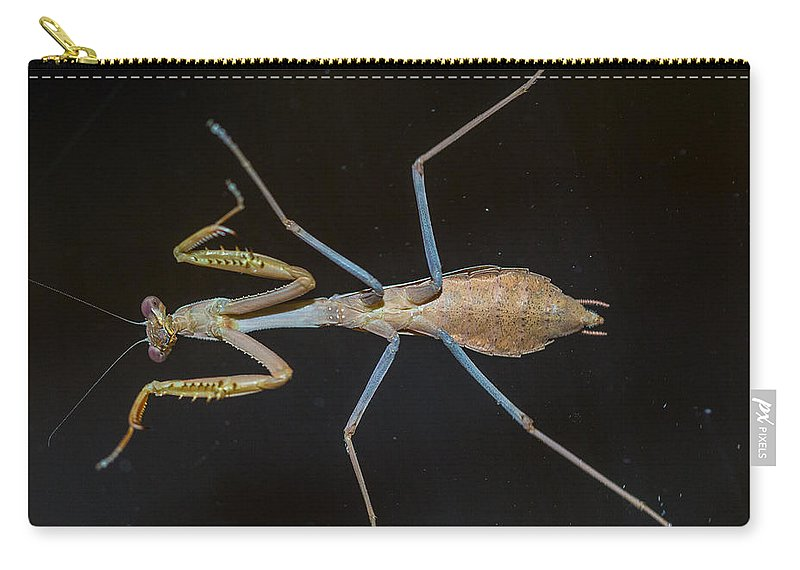 Praying Mantis Carry-all Pouch featuring the photograph Praying Mantis 4 by Angela Stanton