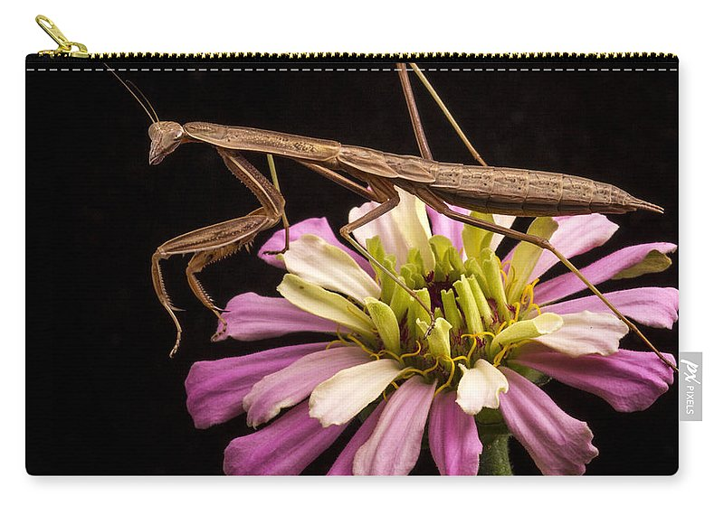 Mantismantis Carry-all Pouch featuring the photograph Praying Mantis On Zinnia by Jean Noren
