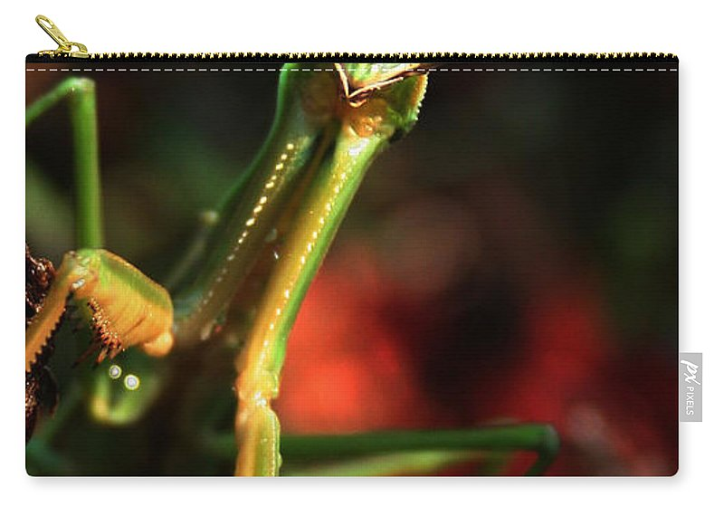 Praying Mantis Carry-all Pouch featuring the photograph Praying Mantis Portrait by Linda Sannuti