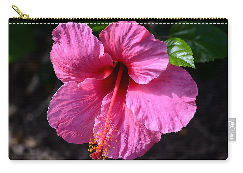 Pink Hibiscus Carry-all Pouch featuring the photograph Pretty In Pink by Debra Martz