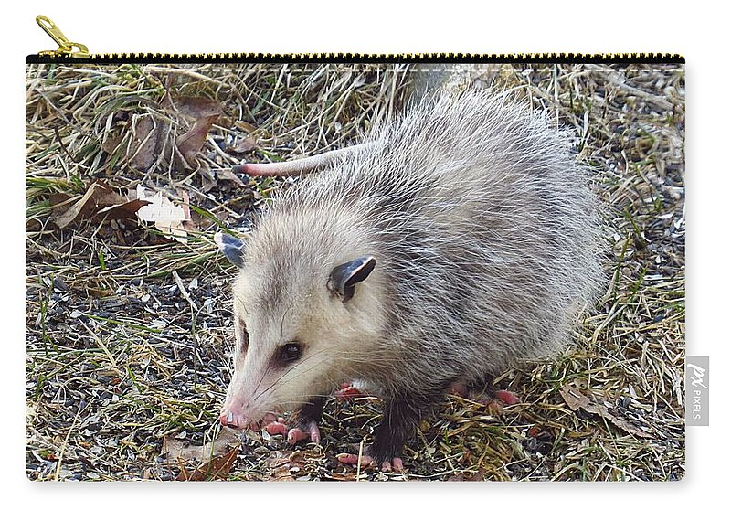 Possum Carry-all Pouch featuring the photograph Pretty Possum by MTBobbins Photography