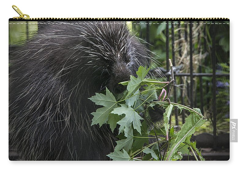 Porcupine Carry-all Pouch featuring the photograph Prickly Pete by Jayne Gohr