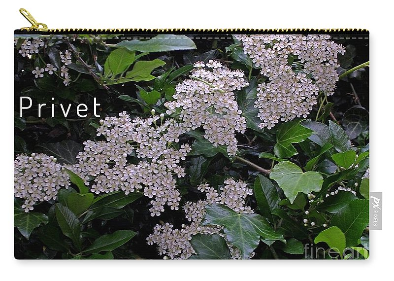 Privet Blossoms Carry-all Pouch featuring the photograph Privet Blossoms 2 by Joan-Violet Stretch