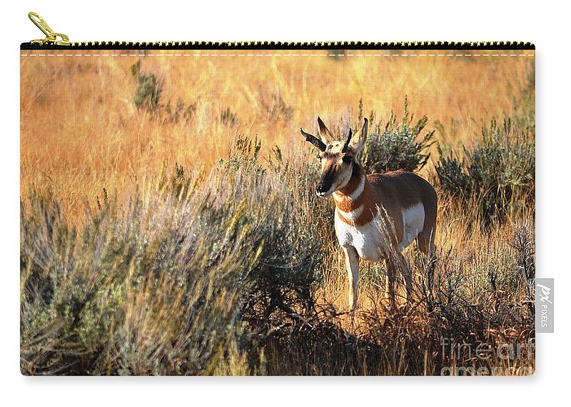 Wildlife Carry-all Pouch featuring the photograph Pronghorn Buck by Deanna Cagle