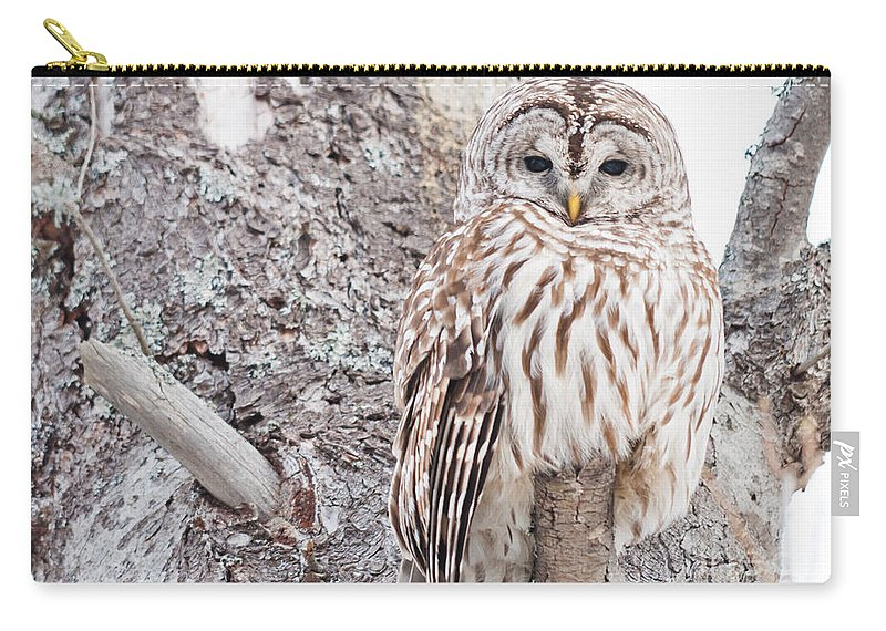 Owls Carry-all Pouch featuring the photograph Proud by Cheryl Baxter