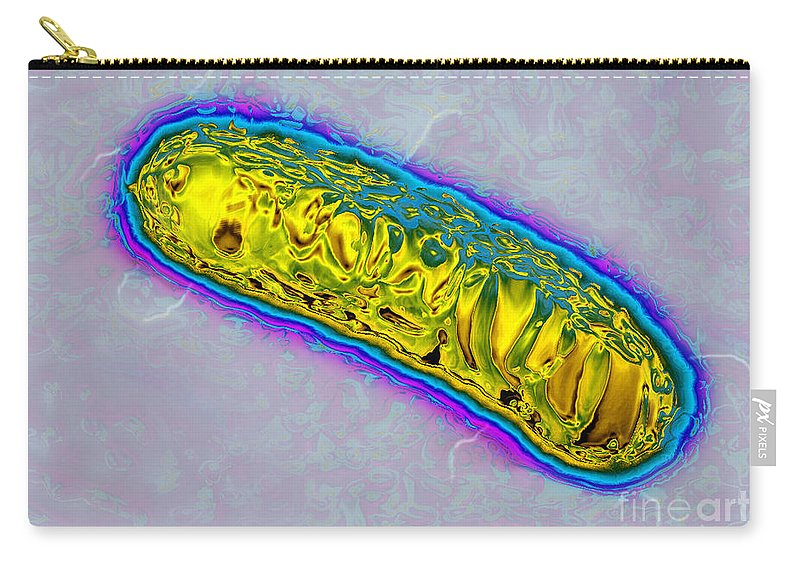 Pseudomonas Bacterium Carry-all Pouch featuring the photograph Pseudomonas Bacterium by James Cavallini