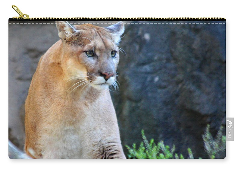 Puma On The Watch Carry-all Pouch featuring the photograph Puma On The Watch by John Telfer