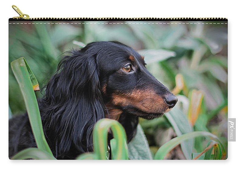 Animals Carry-all Pouch featuring the photograph Pumpkin by Jim Thompson