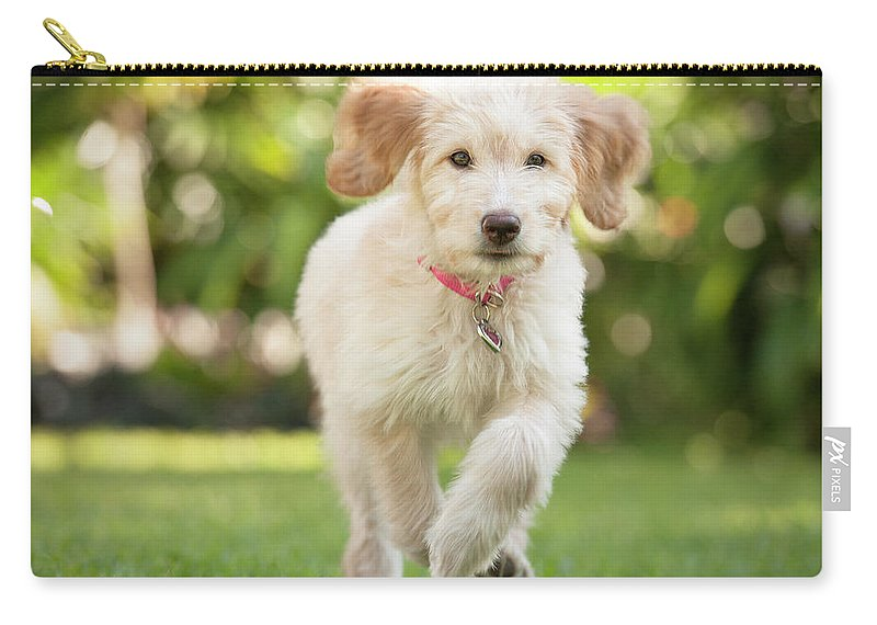 Pets Carry-all Pouch featuring the photograph Puppy Running Through The Grass by Chris Stein