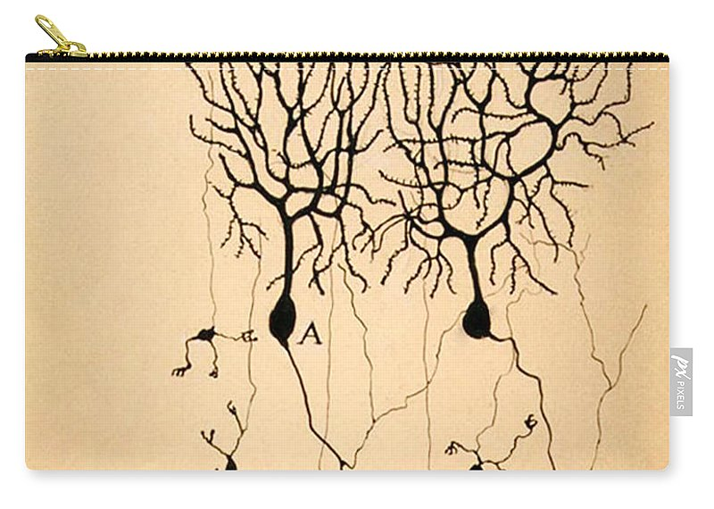 Purkinje Cells Carry-all Pouch featuring the photograph Purkinje Cells By Cajal 1899 by Science Source