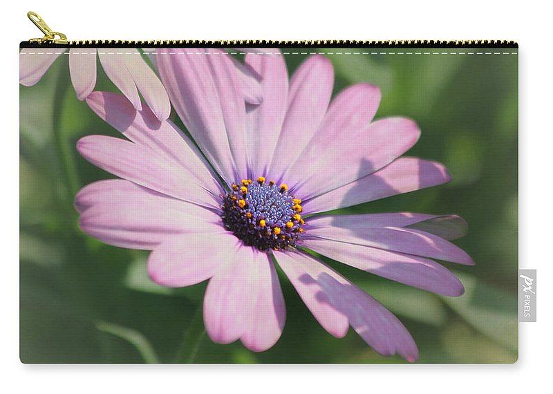 Purple Flower Carry-all Pouch featuring the photograph Purple African Daisy by Kim Hojnacki