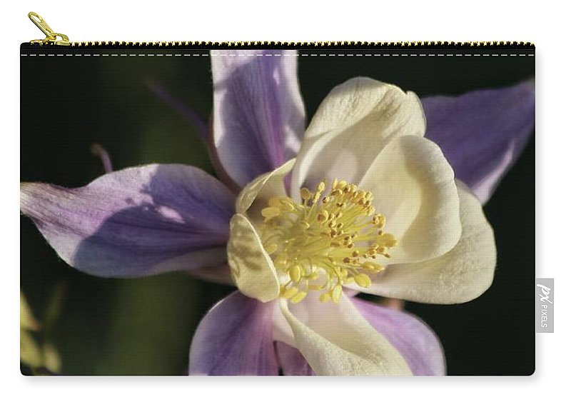 Aquilegia Carry-all Pouch featuring the photograph Purple And Cream Columbine Flower by Kenny Glotfelty