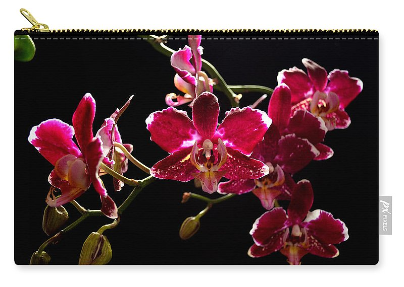 Orchid Carry-all Pouch featuring the photograph Purple And White Orchid by David Hohmann