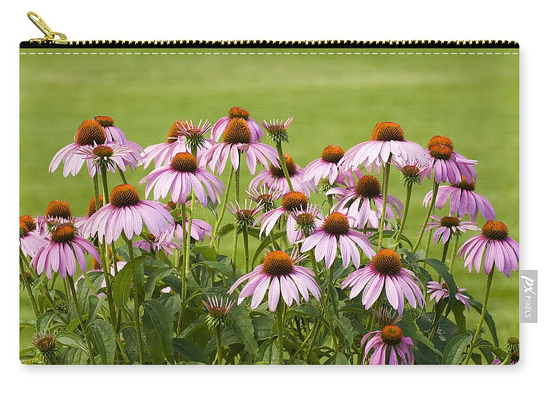 Echinacea Carry-all Pouch featuring the photograph Purple Cone Flowers by Lynn Hansen