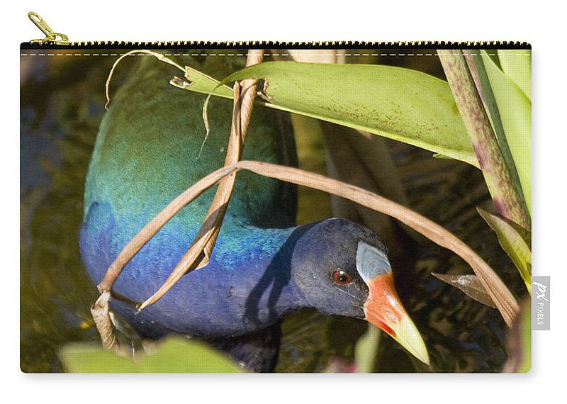 Purple Carry-all Pouch featuring the photograph Purple Gallinule by Sandy Swanson