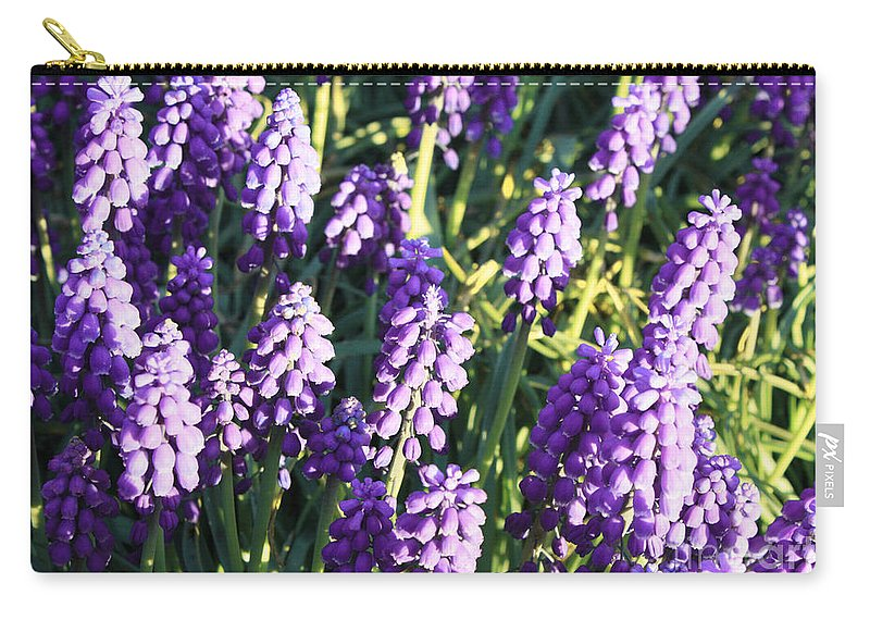Grape Hyacinth Carry-all Pouch featuring the photograph Purple Grape Hyacinth by Carol Groenen
