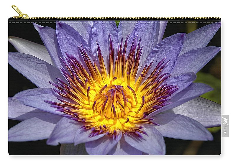 Purple Lotus Carry-all Pouch featuring the photograph Purple Lotus by George Buxbaum
