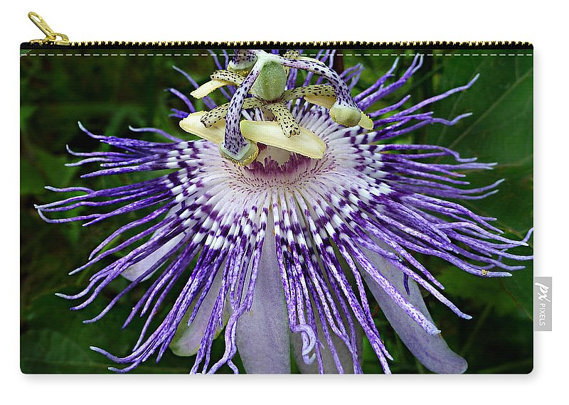 Passiflora Incarnate Carry-all Pouch featuring the photograph Purple Passionflower by William Tanneberger