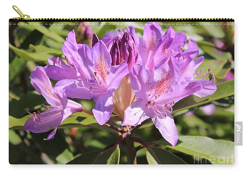 Rhododendron Carry-all Pouch featuring the photograph Purple Rhododendron by Carol Groenen