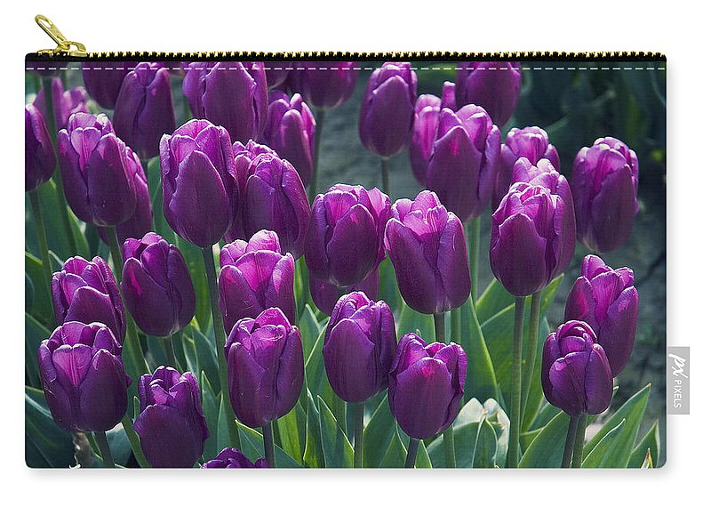Tulips Carry-all Pouch featuring the photograph Purple Tulips by Yulia Kazansky