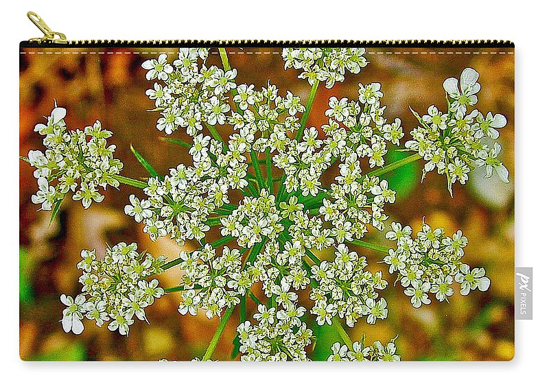 Queen Anne's Lace Or Wild Carrot Near Alamo Carry-all Pouch featuring the photograph Queen Anne's Lace Or Wild Carrot Near Alamo-michigan by Ruth Hager