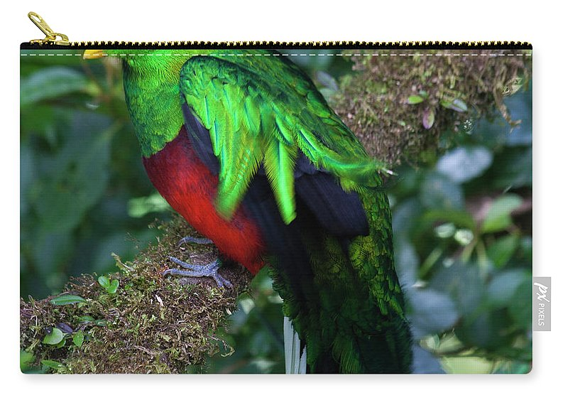 Bird Carry-all Pouch featuring the photograph Quetzal by Heiko Koehrer-Wagner