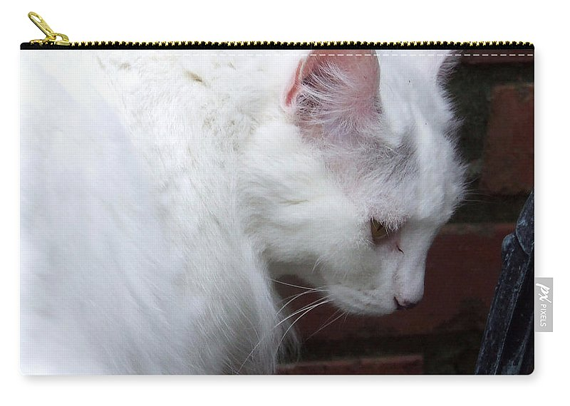 Cat Carry-all Pouch featuring the photograph Quiet Cat by Andrea Anderegg