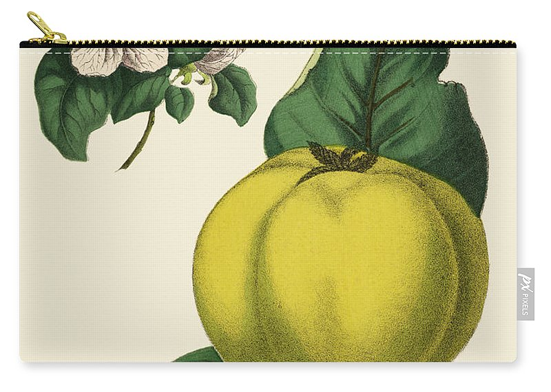 1880-1889 Carry-all Pouch featuring the digital art Quince Fruit Tree, Victorian Botanical by Bauhaus1000