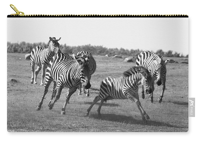 Racing Zebras Carry-all Pouch featuring the photograph Racing Zebras 1 by Tracy Winter