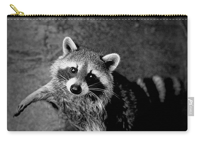Art; Photography; Black And White; Gray; Grey; Monochrome; Photograph; Racoon; Coon; Bandit; Nocturnal; Woods; Mammal; Animal; Randynyhof Carry-all Pouch featuring the photograph Racoon Bandit by Randall Nyhof